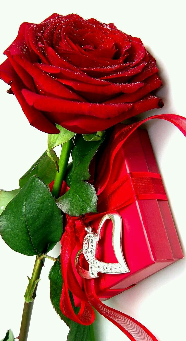 Pin by ام جود on أجمَـــلُ الورود Beautiful red roses