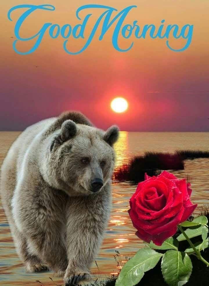 Философия картинки доброе утро медведи