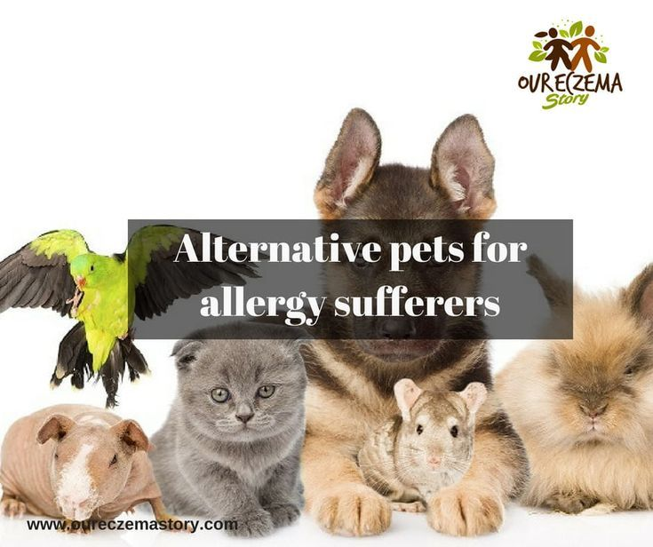 Alternative pets for allergy sufferers Kids will love