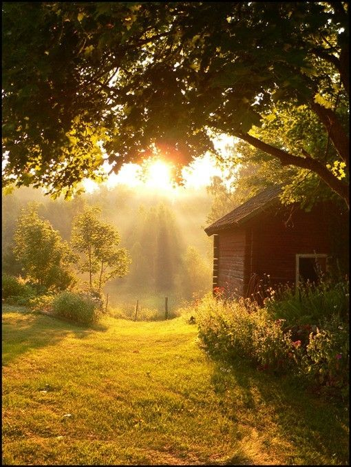 country sunshine. Would love to see this every morning.