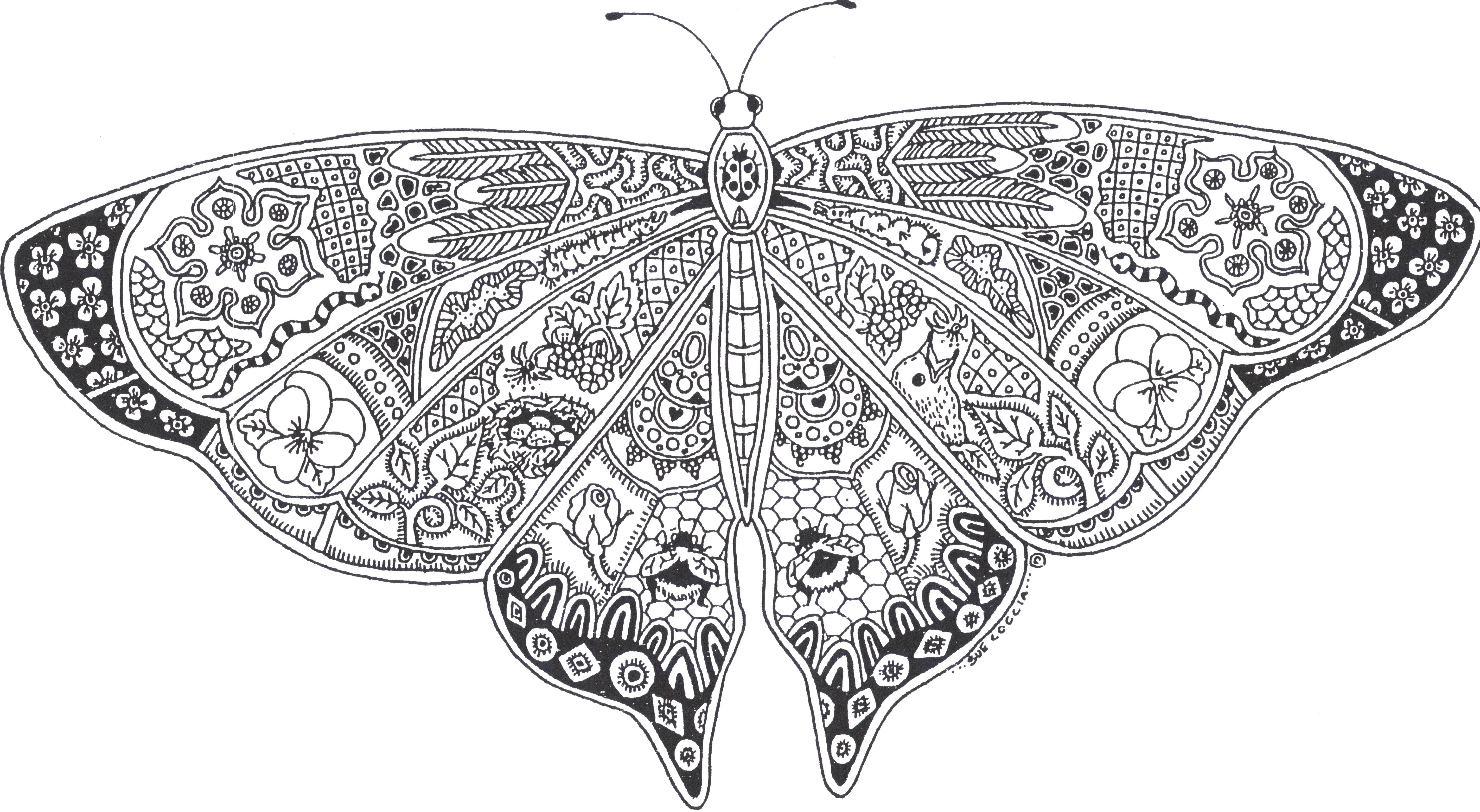 Printable Coloring Page Butterfly Pages Pinterest Free Download