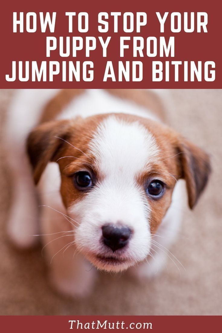 How to stop my puppy from jumping and biting via