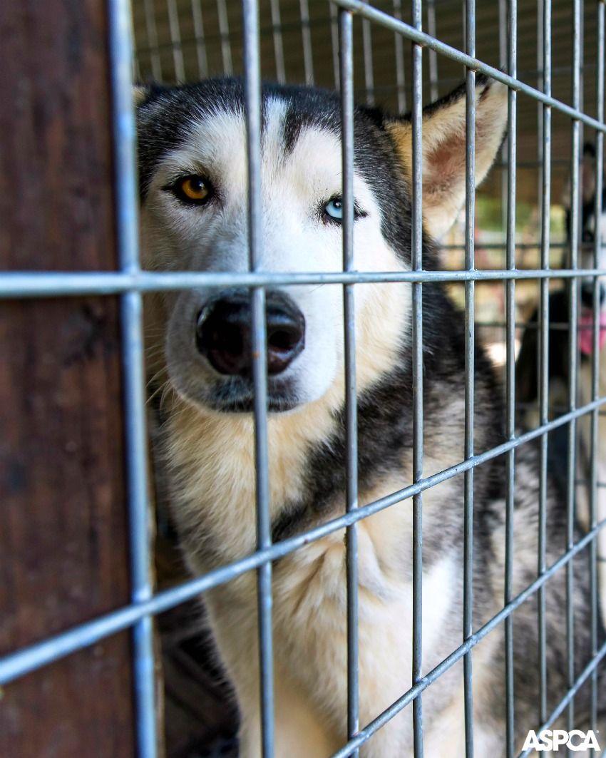 Ways To Give Animals Animal Activism Puppy Mills