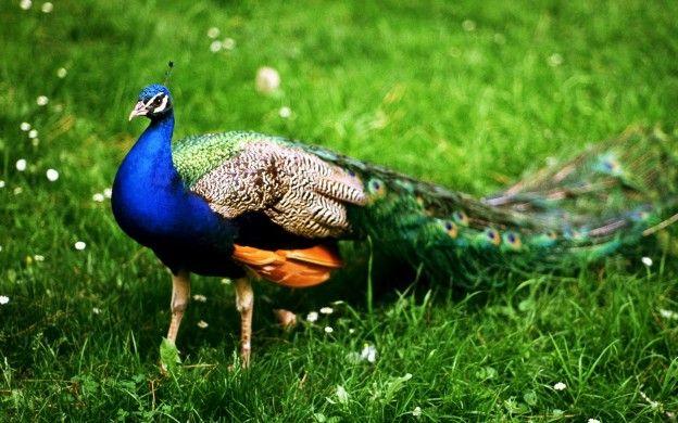 Most Beautiful Bird In India