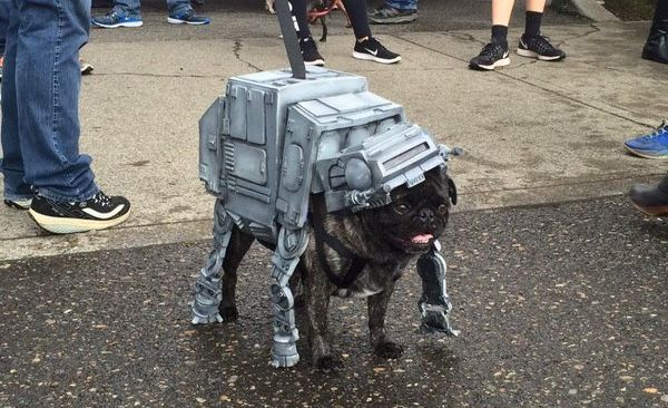 Behold A Star Wars Pug Parade Might Be The Most Amazing Parade