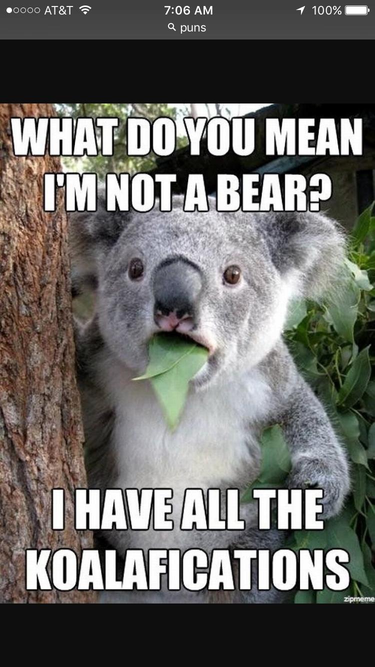 Pin by Amelia Davis on Funny/Cute | Koala meme, Koala bear ...  Funny Koala Memes