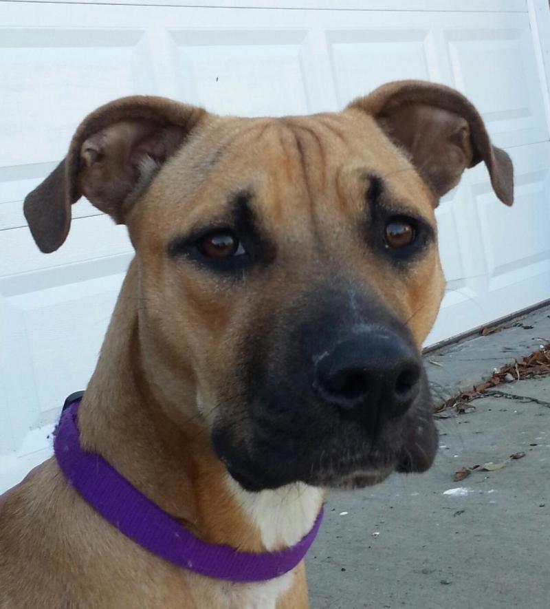 Adopt Pancake On Petfinder Dog Pounds Dog Adoption Pet Adoption