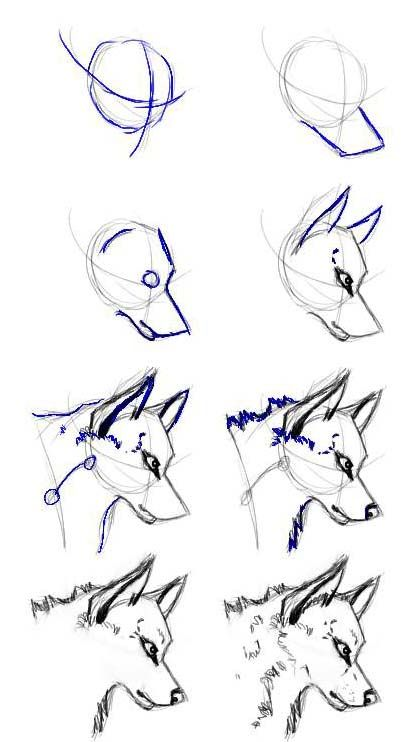 How to draw a wolf wolfs pinterest wolf drawings and sketch how to draw a wolf ccuart Image collections