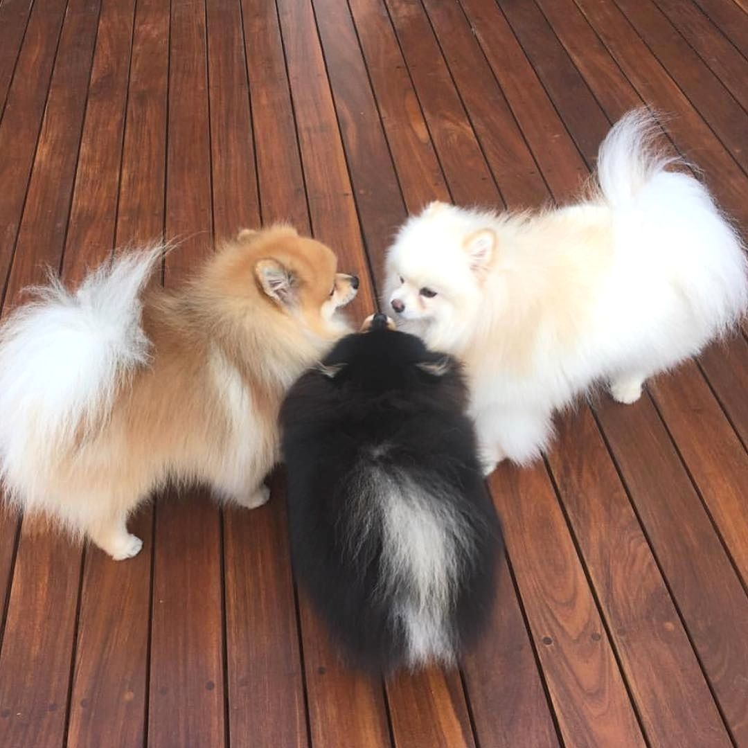 Aww this is adorable Dogs And Puppies Baby dogs, Cute