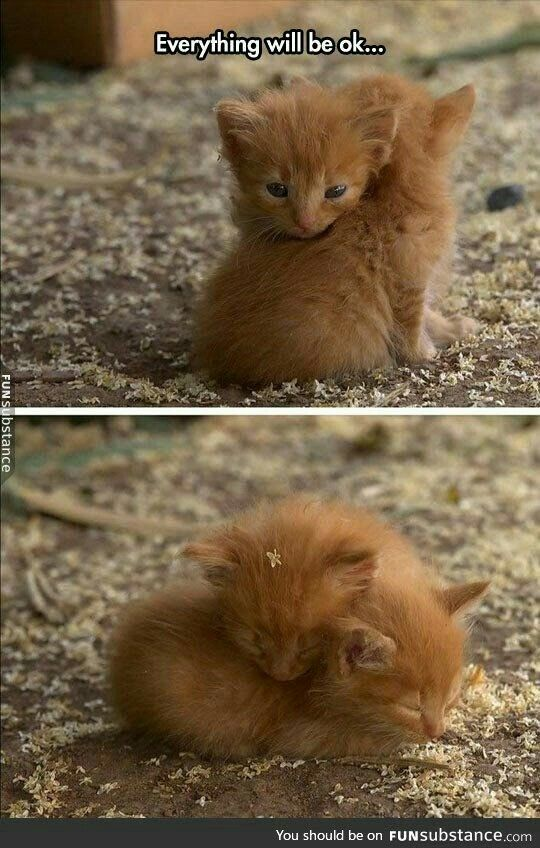 Don't worry I am here for you (With images) | Kittens cutest, Cute ...