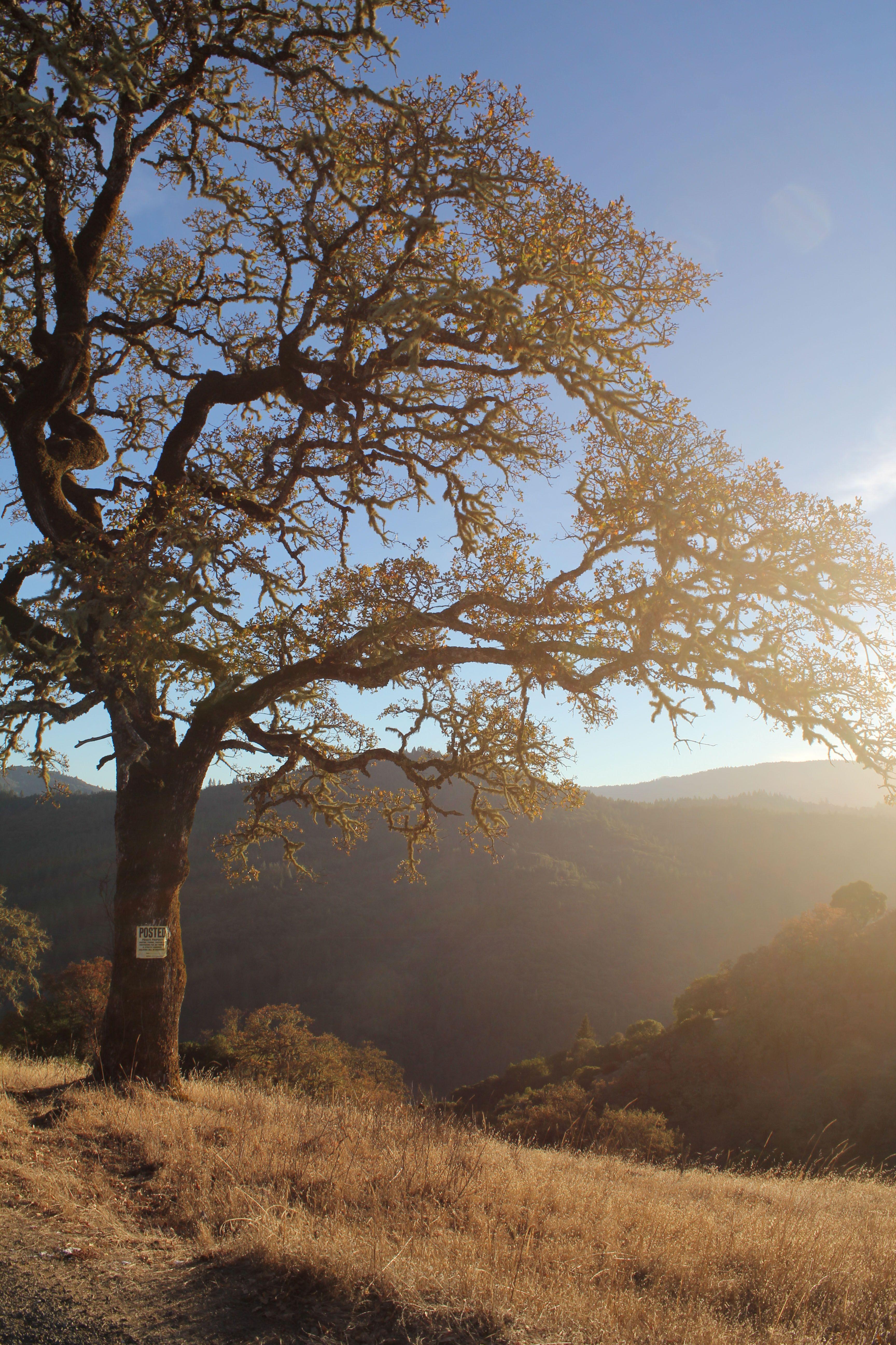 Mendocino county california mendocino county