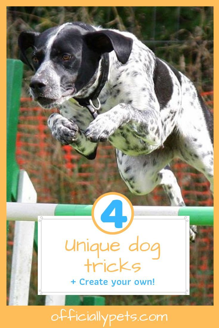 4 unique tricks to teach your dog create your own