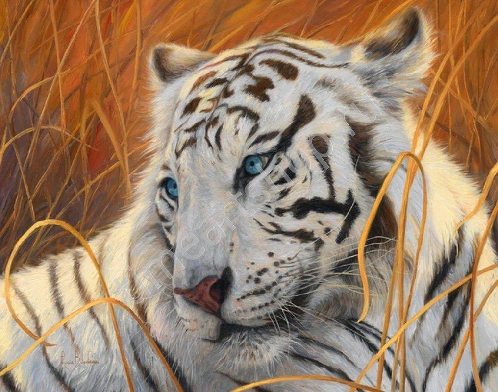 Белый тигр в осенней траве, картина раскраска по номерам ...