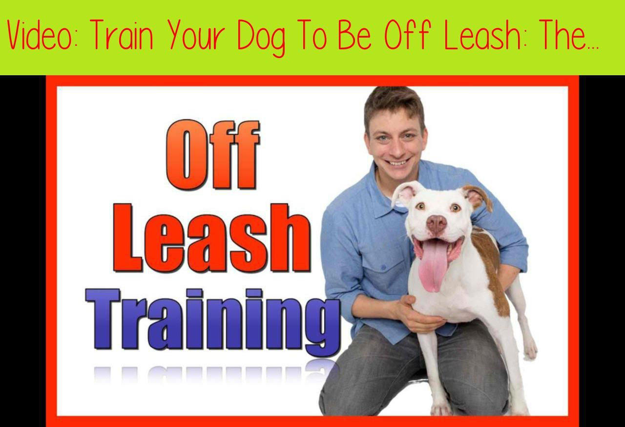 Train Your Dog To Be Off Leash The First Stepsenter Code Zak20