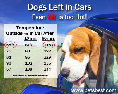 Dog Health Heat Safety Dogs Left In Cars Pets Best