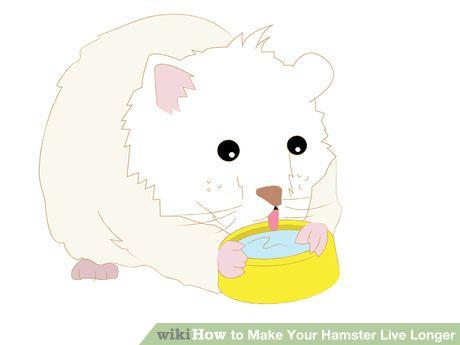 How To Make Your Hamster Live Longer Hamster Live Hamster Live Long If you like hamster follow me. how to make your hamster live longer