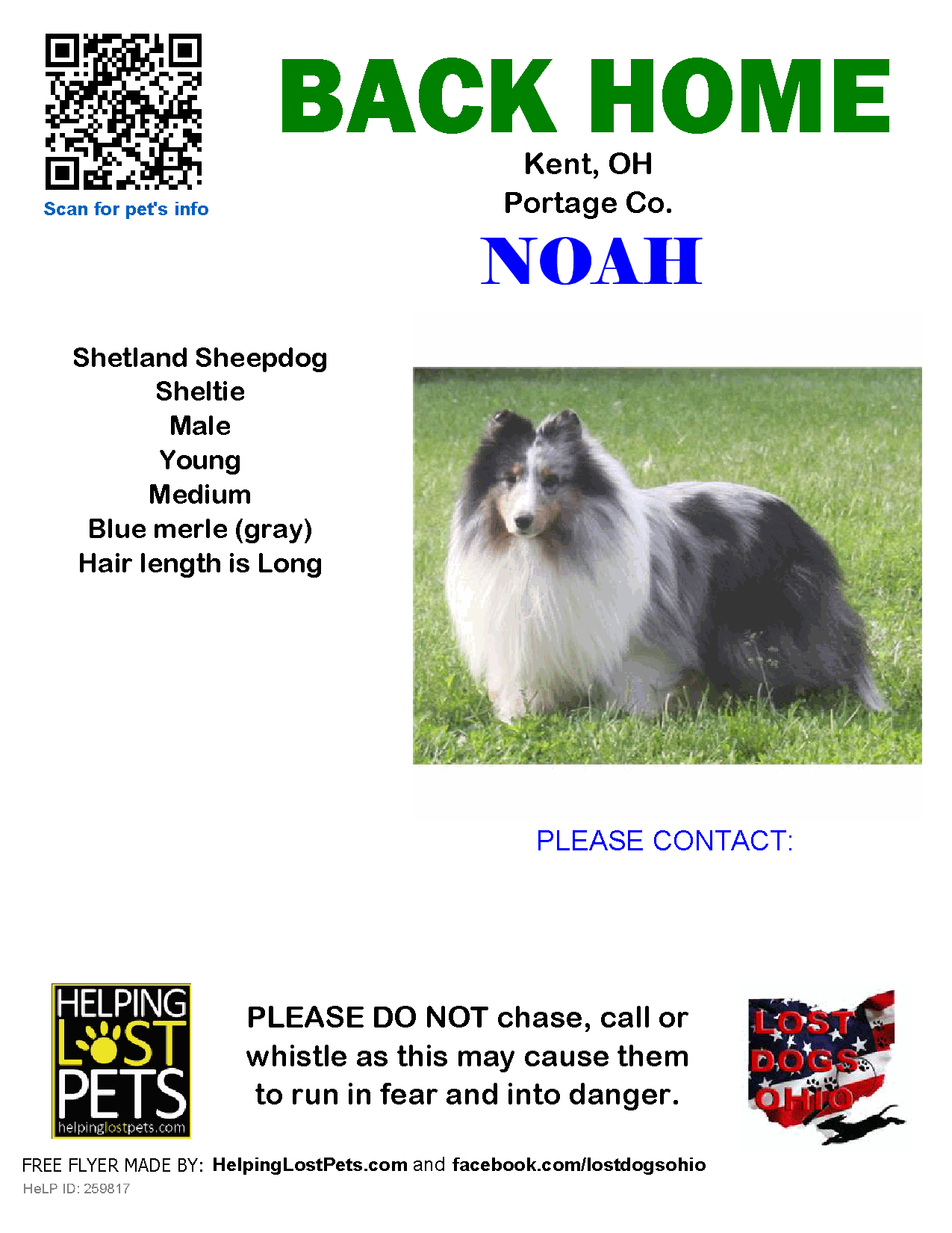 Helping Lost Pets Dog Shetland Sheepdog Sheltie Back Home