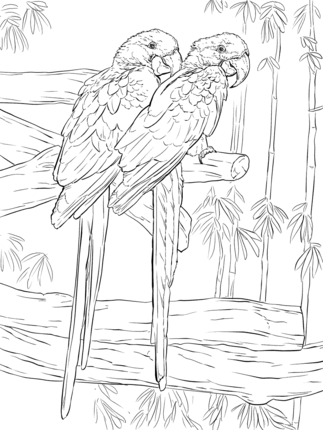 Click To See Printable Version Of Pair Hyacinth Macaws Coloring Page