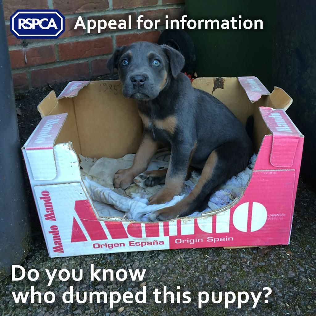 Rspca England Wales On Rottweiler Puppies Puppies Pet Adoption