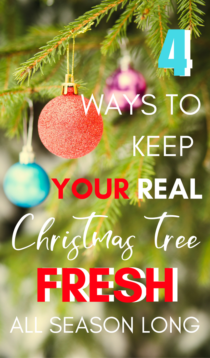 4 Ways to Keep Your Live Christmas Tree Fresh All Season | Share All ...