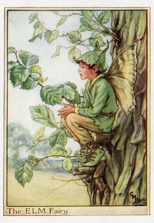 The ELM Fairy ~ Cicely Mary Barker ~