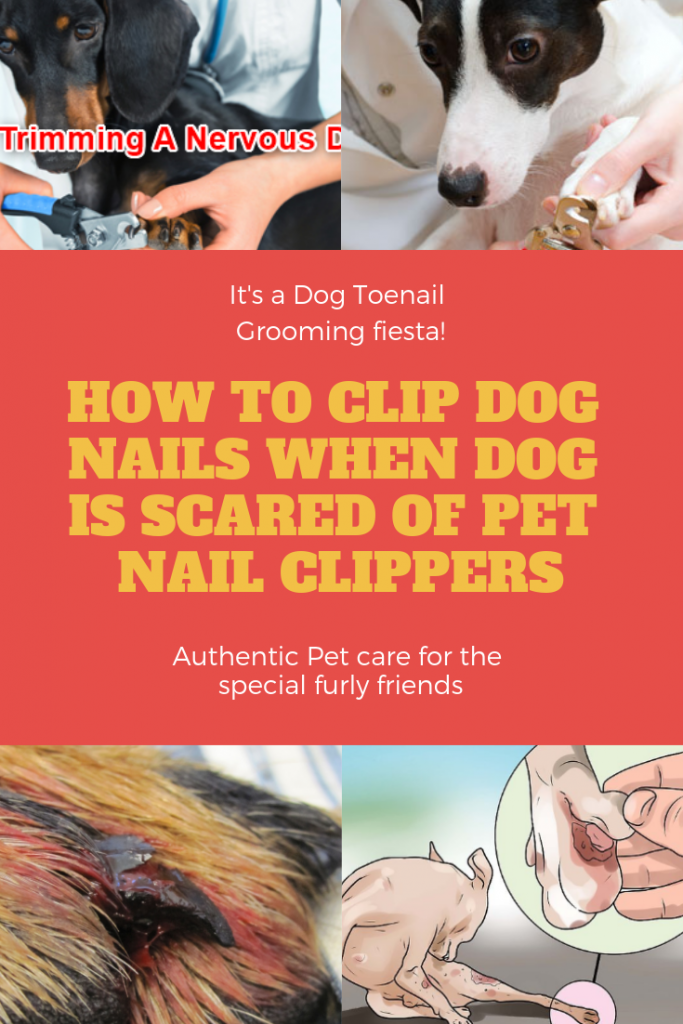 How To Clip Dog Nails When Dog Is Scared Of Pet Nail Clippers Best