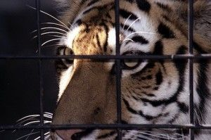 Shut Down 'World's Worst Zoo'   Please take a moment to sign this petition.