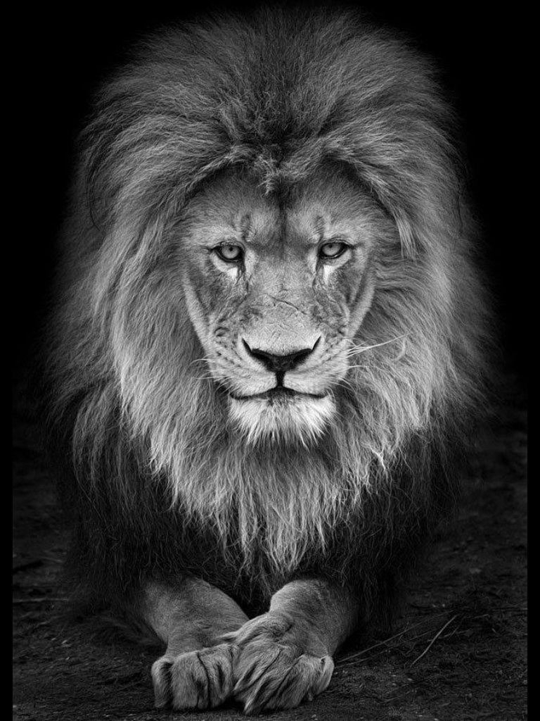Pin von David W auf Logos | Pinterest | Löwin und Bilder