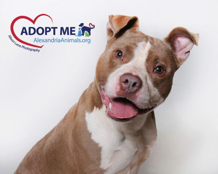 13++ Tuscaloosa metro animal shelter ideas