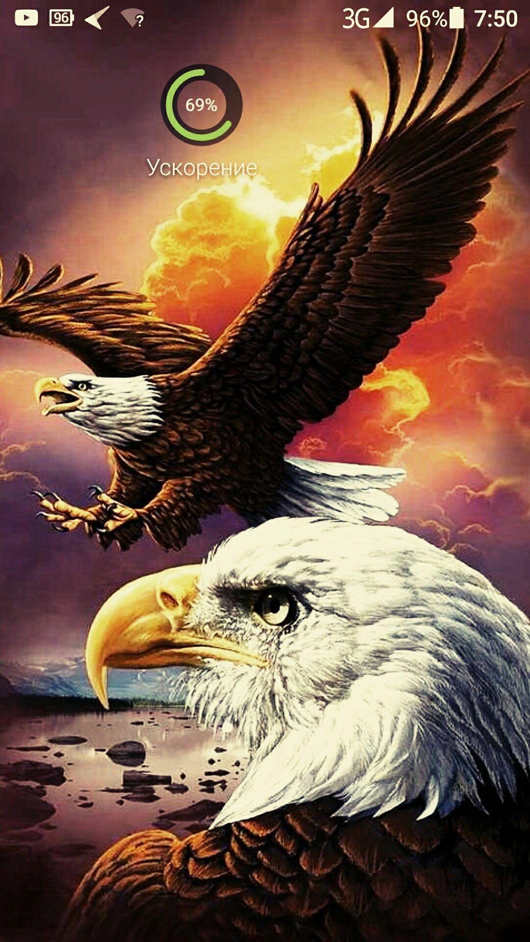 Pin Van Atila Yilmaz Op Barbekyu The Eagles Roofvogels Huisdier Vogel