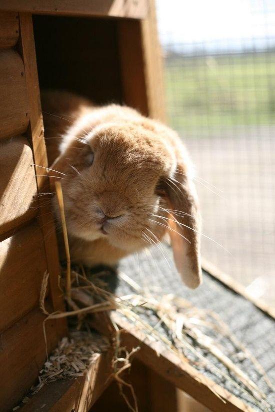 Rabbit Susse Tiere Haustiere Kaninchen