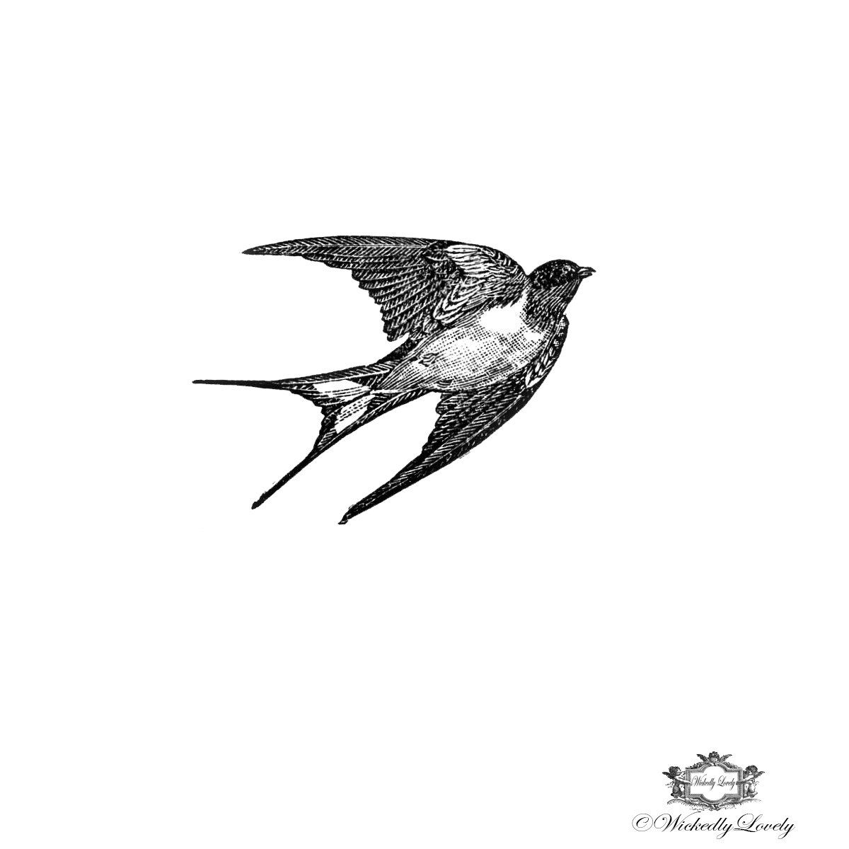 Black And White Vintage Swallow Tattoo Bird Body Art Wickedly Lovely Skin Includes 3 Tattoos By WickedlyLovelyArt On Etsy