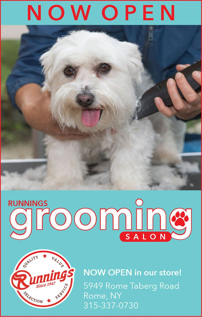 Dog Grooming Service At Rome Ny Store Runnings Dog Grooming Grooming Dogs