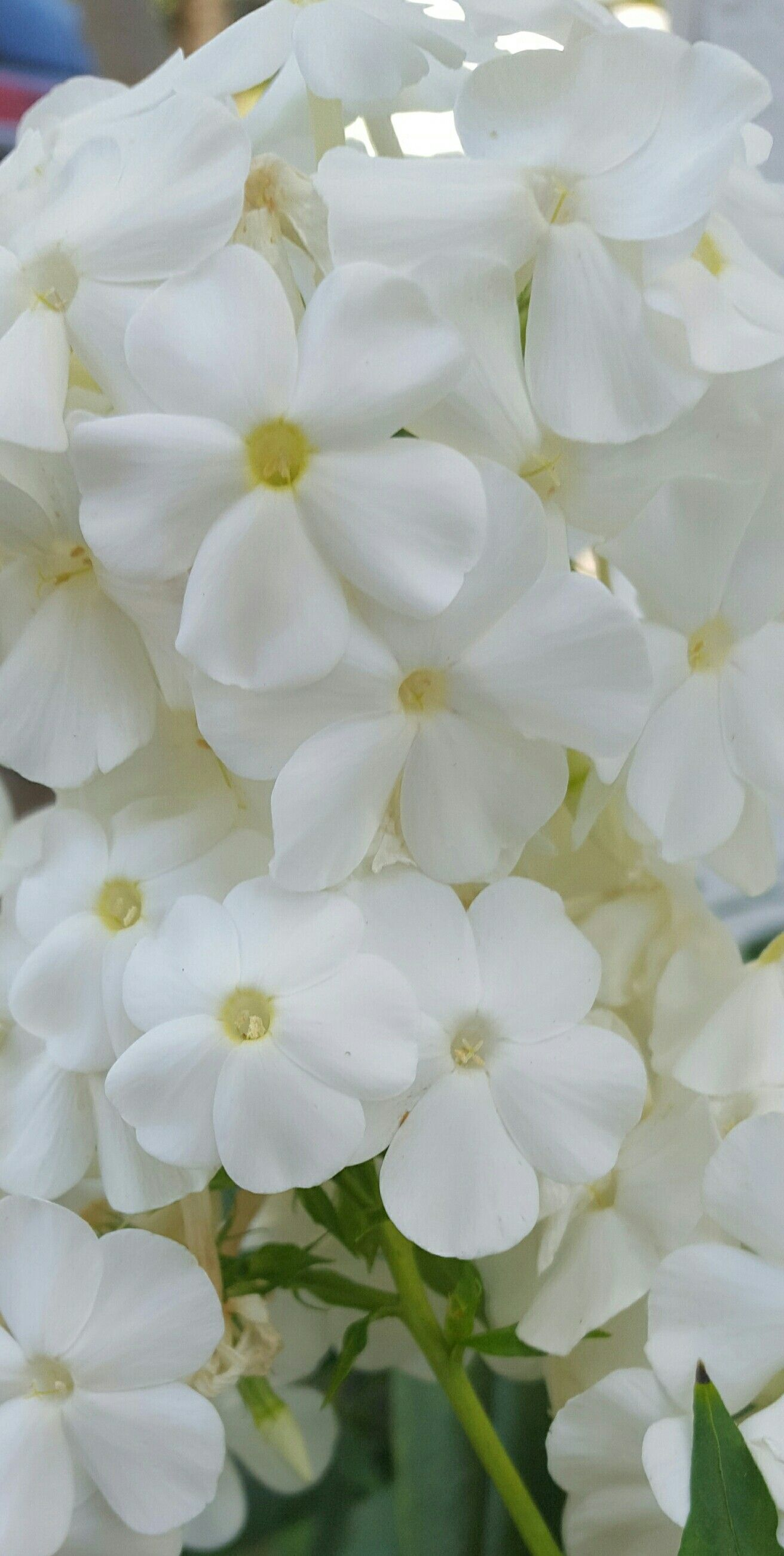 Pin By On Pinterest White Flowers Flowers