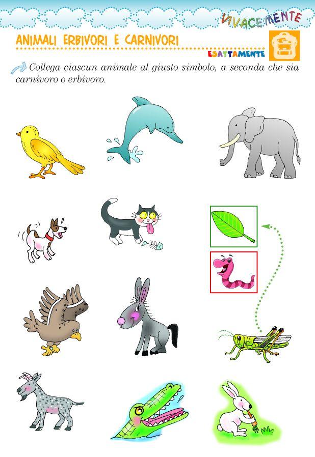 Disegni Da Colorare Di Animali Onnivori.Animali Carnivori Ed Erbivori Scienza Per Bambini Animali