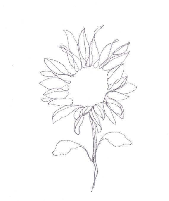 Minimalist Abstract Botanical Pencil Drawing Archival Art Print Graphite Sunflower