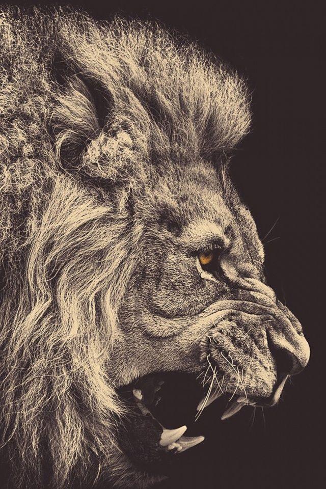 Dark Lion Mobile Wallpaper Mobiles Wall