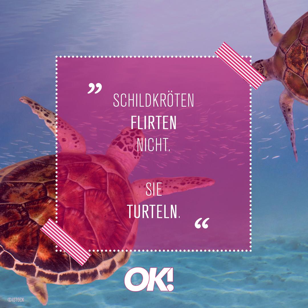 schildkröten flirten nicht sie turteln