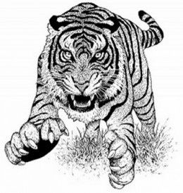 Tiger coloring page, coloring tiger, tiger animal, zentangle tiger ...