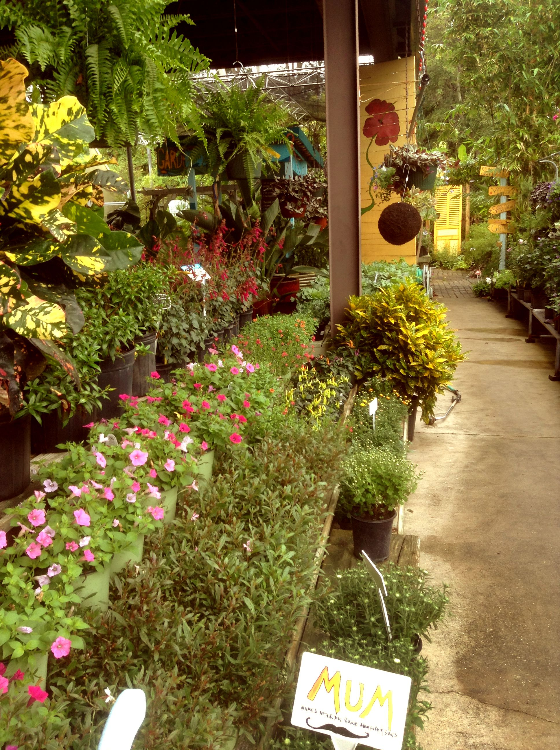 The Garden Shop busting with Cool Season Color :) | Gardening ...