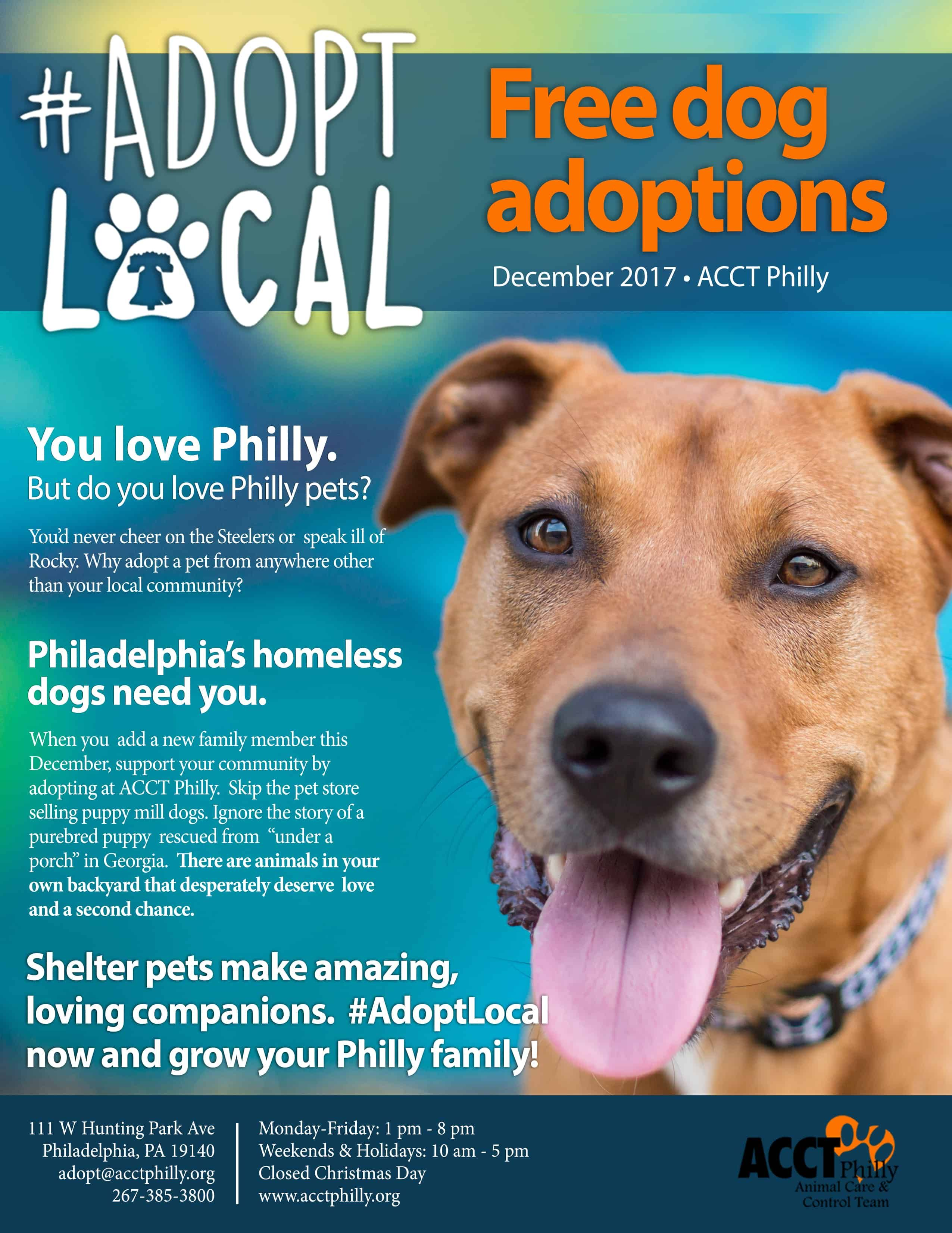 Pin By Lynn Fox On Flyer Inspiration Ideas Homeless Dogs Adoption Information Free Dogs