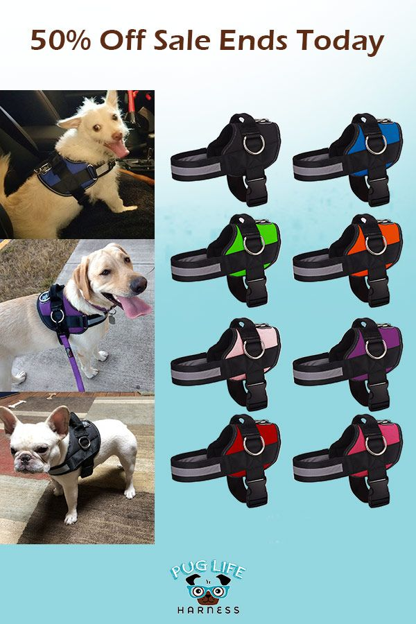 World S Best Dog Harness 2019 Version Dogs Dogs Puppies