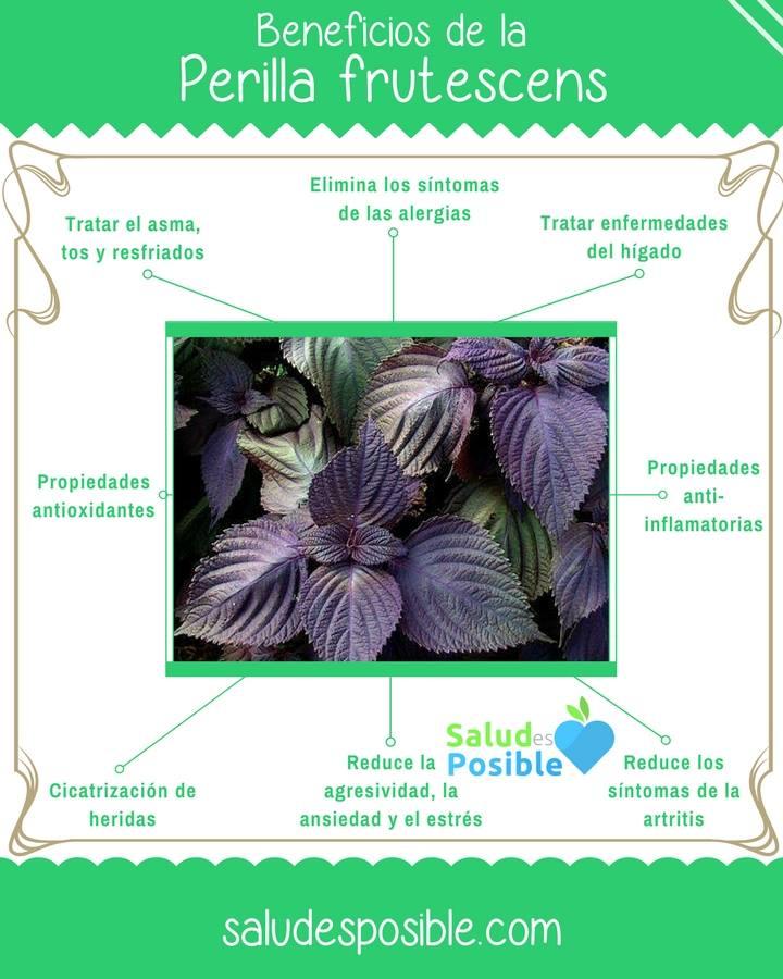Perilla o shisho, una planta antialérgica y mucho más