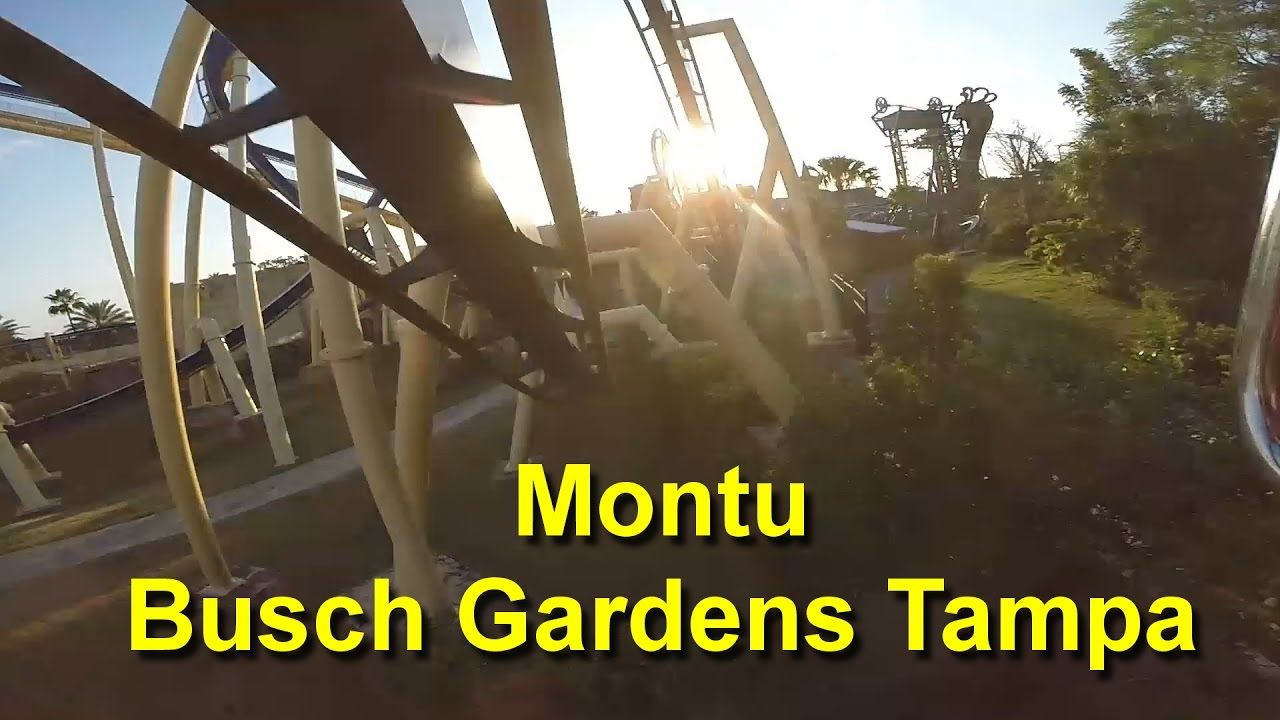 Montu Roller Coaster On Ride Front Seat HD POV at Sunset Busch ...