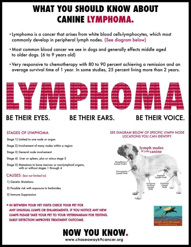 Lymphoma dog health Informational Resources for Dogs - lost pet flyer template free