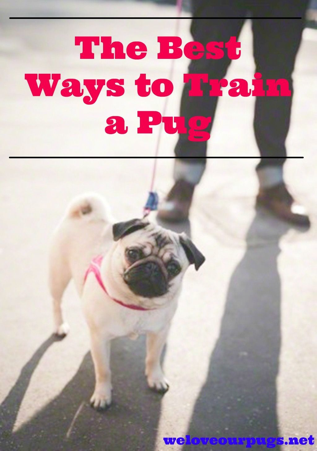 If You Would Like To Know How You Can Train Pug Puppies You Have