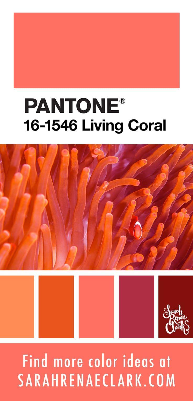 25 Color Palettes Inspired By Ocean Life And Pantone Living Coral Coral Colour Palette Pantone Colour Palettes Coral Color Schemes