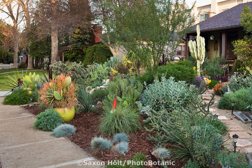 Small Space Front Yard Drought Tolerant Los Angeles California