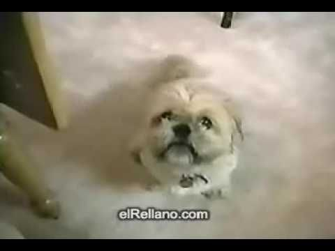 Talking Dogs View More Video Http Funny Dog Videos Photos