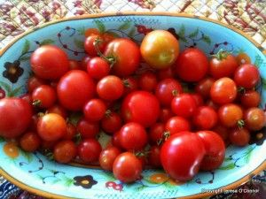 A Quick Guide to Growing Healthy Tomatoes with recipes and heirloom varieties.